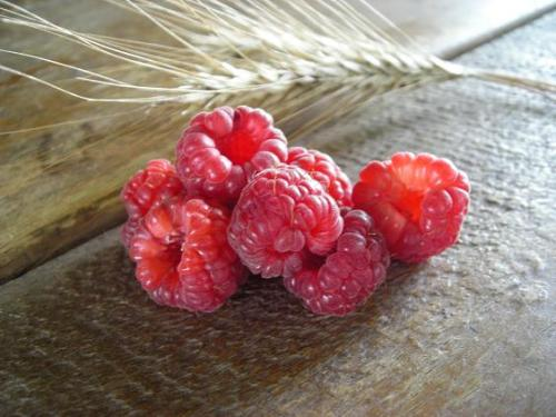 summer raspberries 013